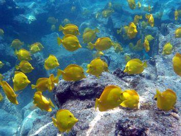 Aquarium Fish Battle
