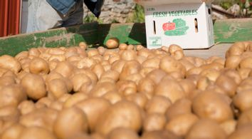 Congress Potatoes