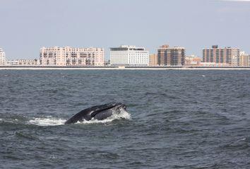 NYC Humpbacks