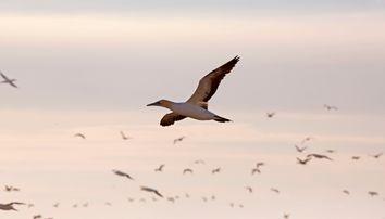 South Africa Bird Island