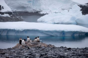 Antarctica Penguin Deaths