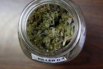 Marijuana Opioid Alternative