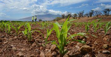 Hawaii GMO Ban
