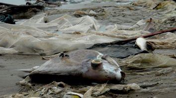 Vietnam Fish Deaths