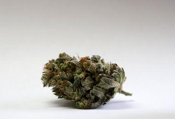Campaign 2016 Marijuana Northeast Foothold