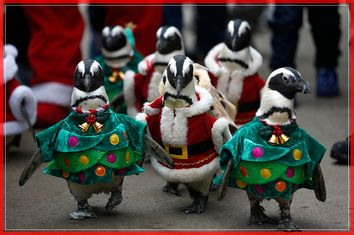 Visitors look at penguins wearing Santa Claus and Christmas tree costumes during a promotional event for Christmas in Yongin