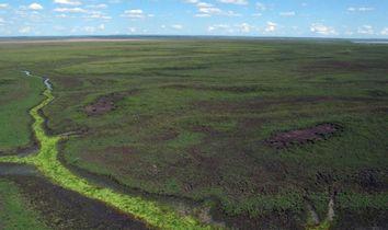 Mozambique Reviving Gorongosa