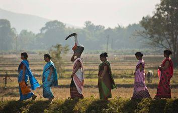 India Saving Storks