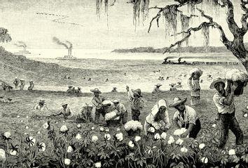 Slaves Harvesting cotton in Louisiana