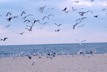 Seagulls flying above Risden's Beach in Point Pleasant Beach, N.J.