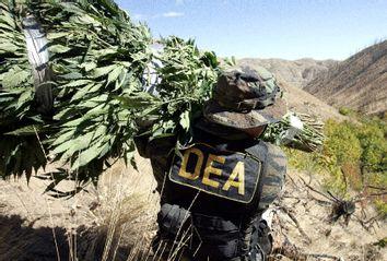 DEA Agent Marijuana