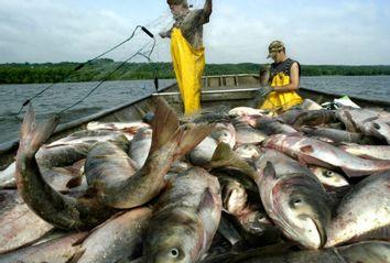 asian carp fisherman