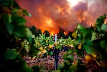 California Wildfire; Vineyards