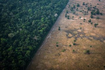 Deforestation; Amazon; Rainforest; Brazil