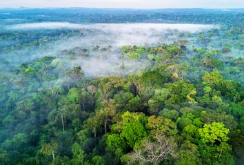 Amazon rainforest; Brazil
