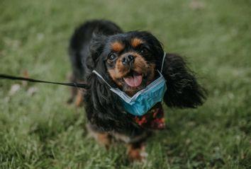 Dog wearing medical mask