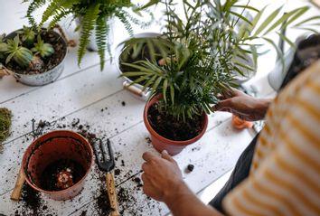 Transplanting potted plants