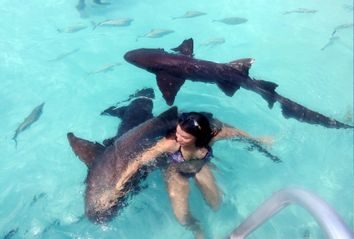 Young Woman Swimming With Nurse Sharks