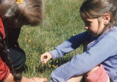 Image for Scavenger: How my grandmother taught me to eat weeds