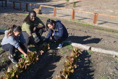 A farm and restaurant program that helps foster kids succeed