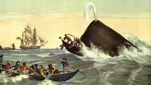Swallowed By A Whale A True Tale Salon