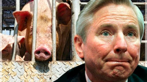Hog manure's disgusting king: How corporate pig production made