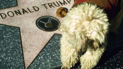 Why doesn't Trump have a dog — and should he get one? Experts weigh