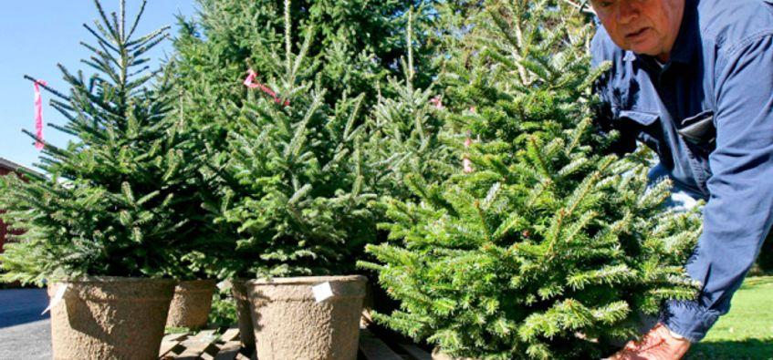 Living Christmas Tree Salon Com