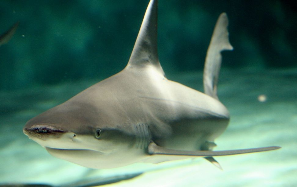 China bans shark fin soup at official dinners
