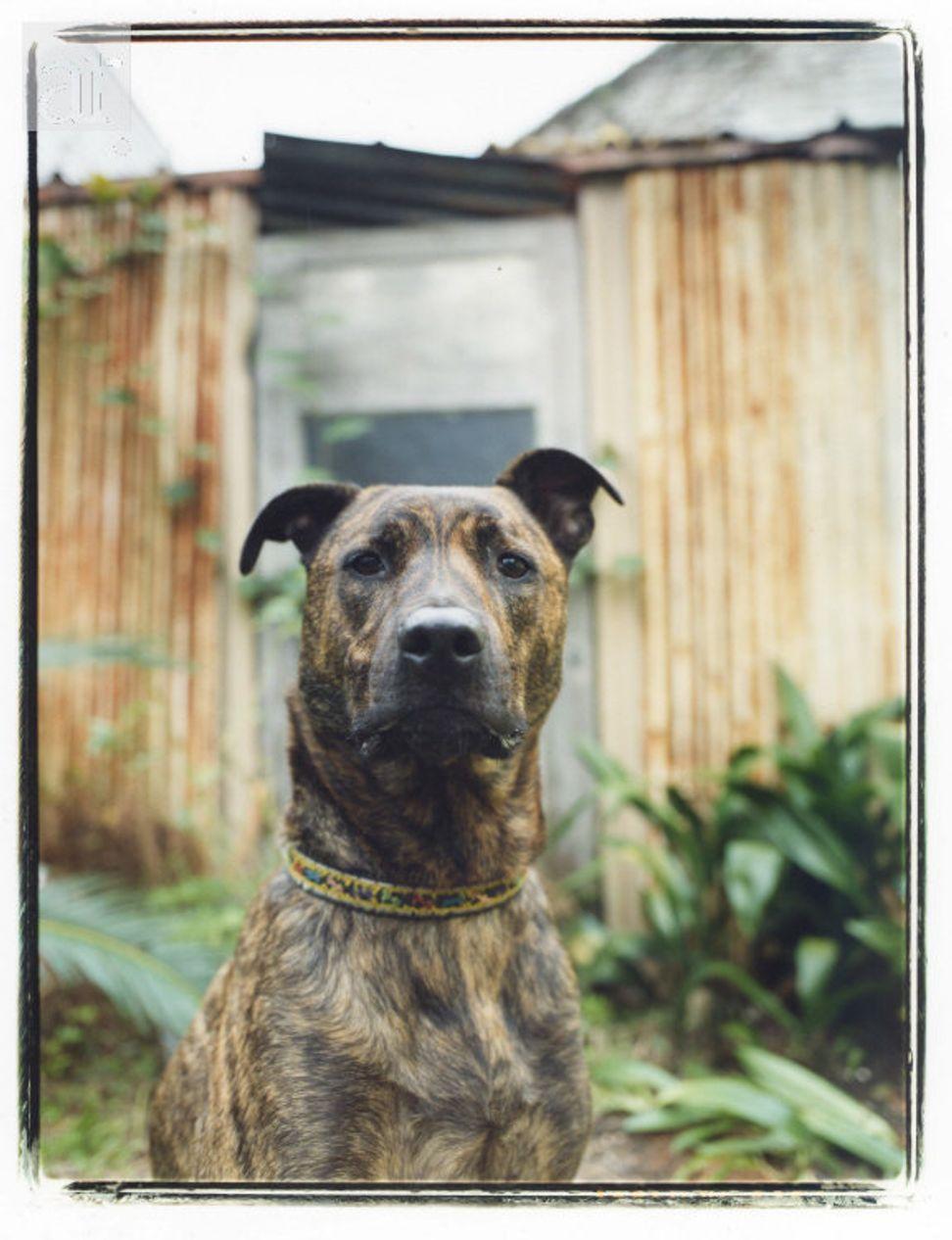 Ten amazing memories: Heartwarming stories of my dog, Brando (2000-2013)