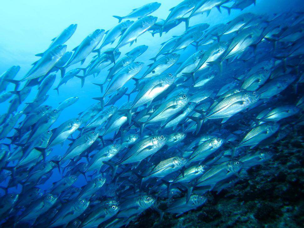 West Coast waters on acid trip; fishing industry in peril   Salon.com