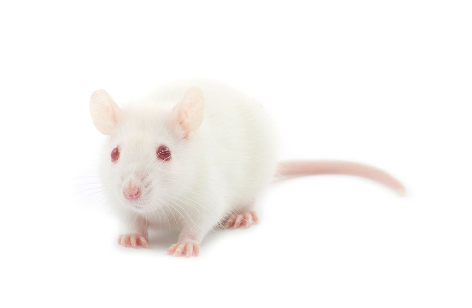 Scientists implant false memories in mouse's brain | Salon.com