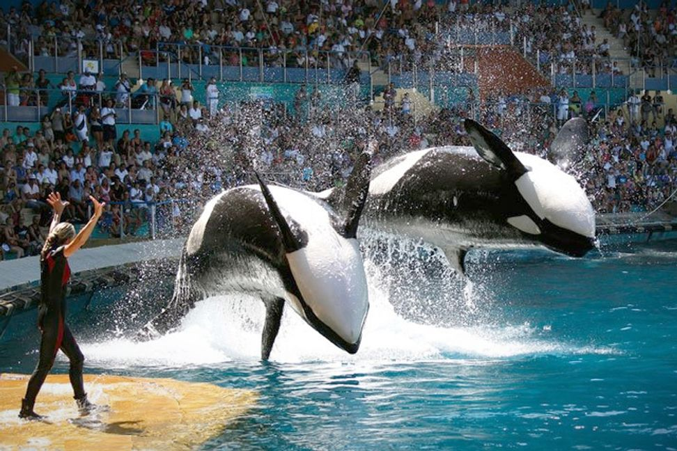 Free Willy, for real: SeaWorld has got to go | Salon.com