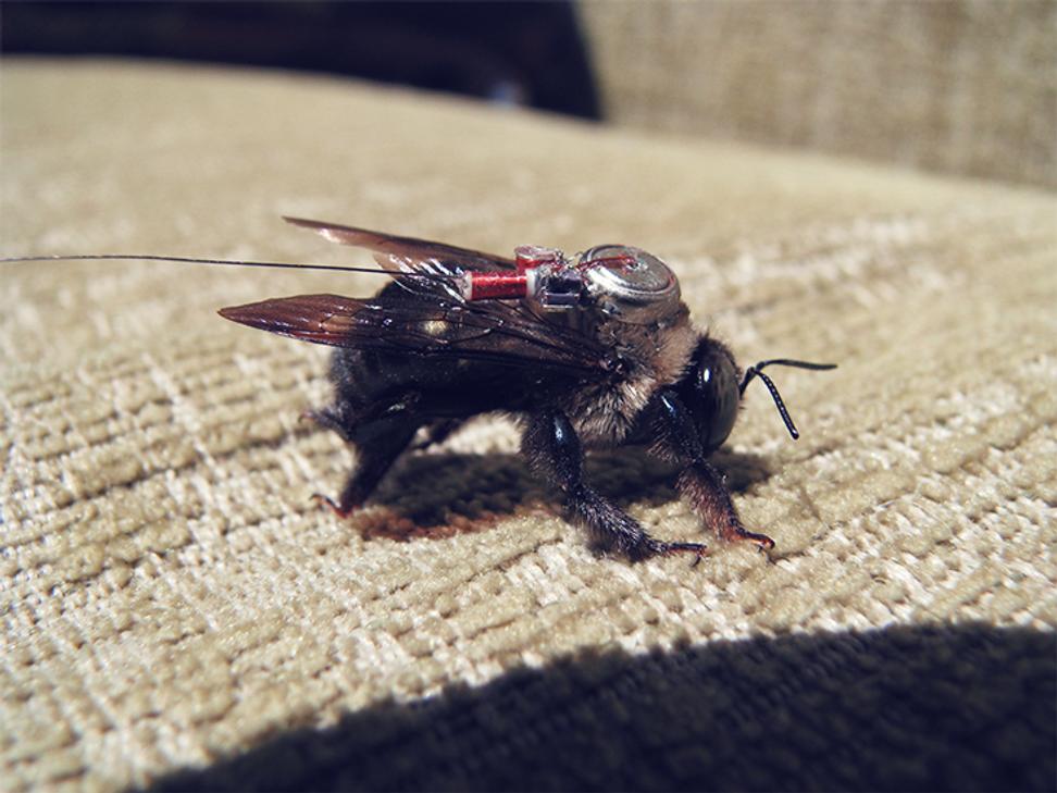 Tracking honeybees to save them | Salon.com
