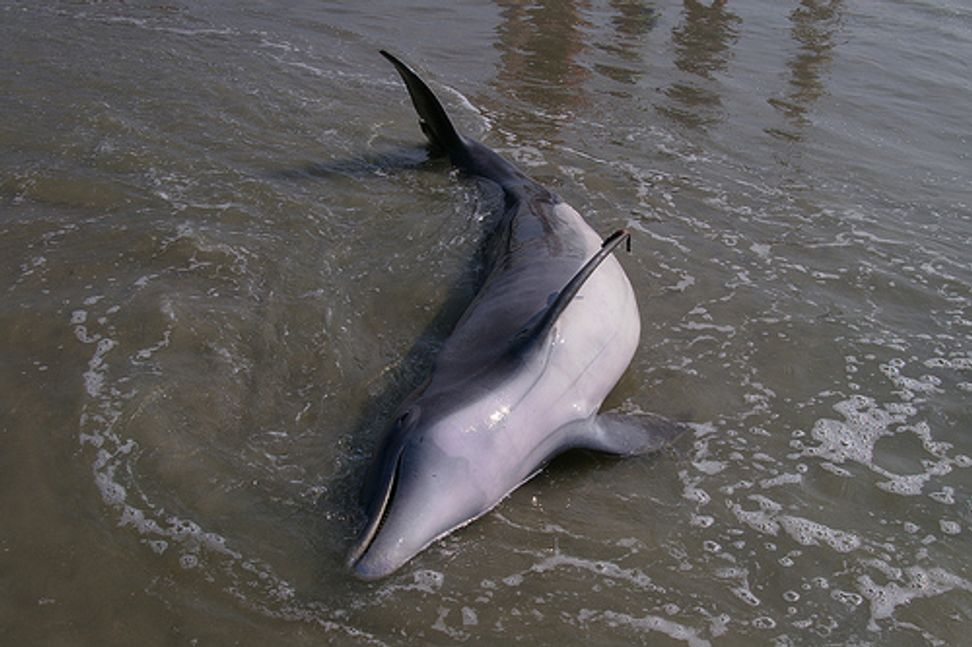 Dead dolphins might be trying to tell us something