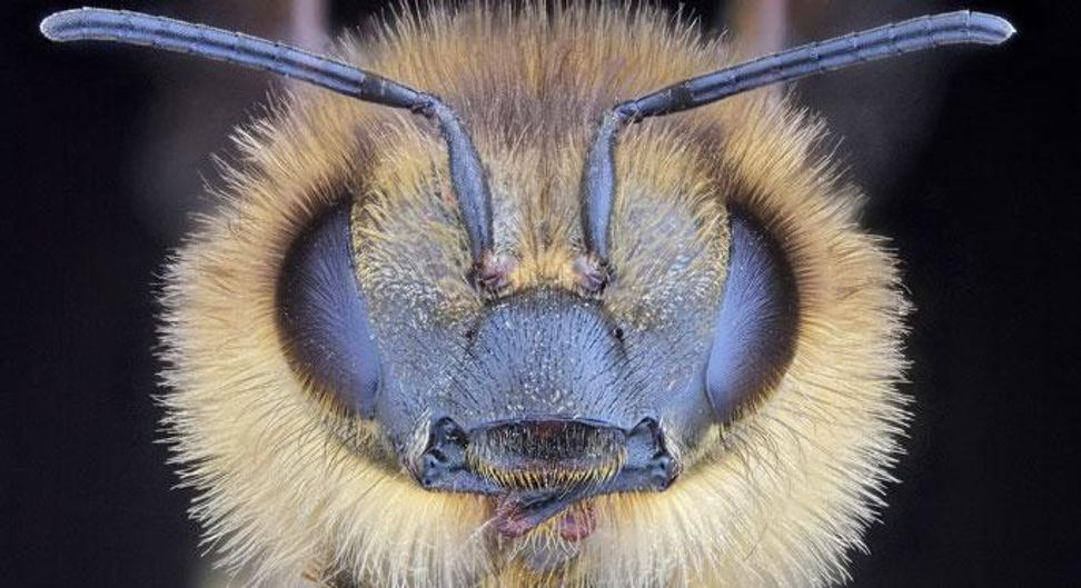 The truth stings: Still no answers for collapsing bee colonies