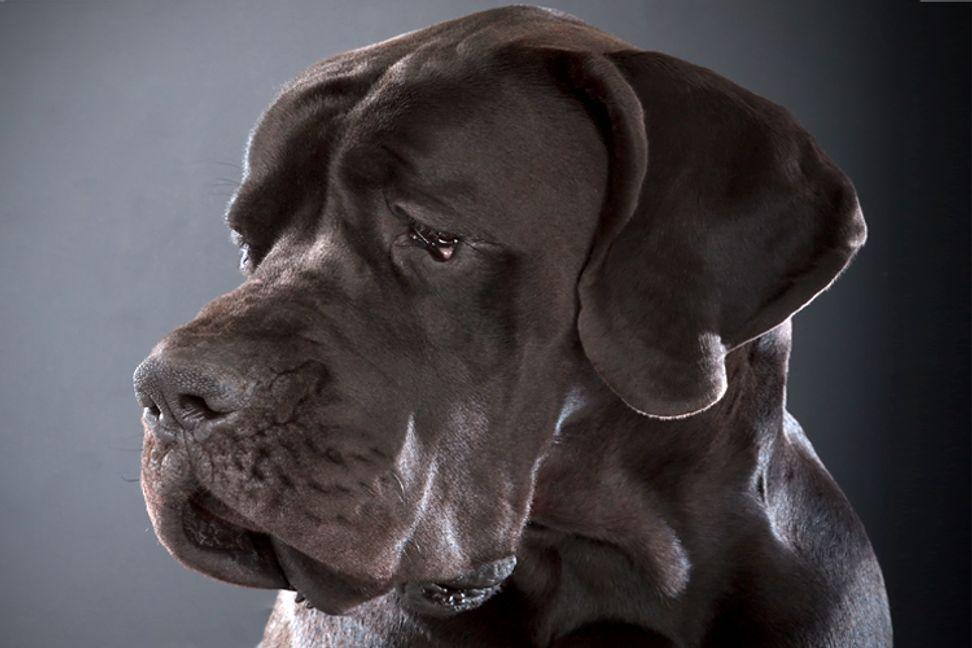 Why women love big dogs   Salon.com