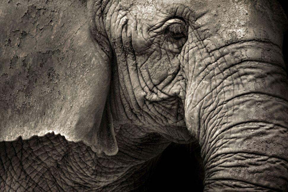 Bronx Zoo, Disney World's Animal Kingdom among the worst places to be an elephant