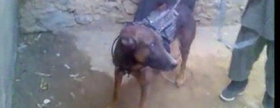 Taliban: We're holding this American military dog hostage