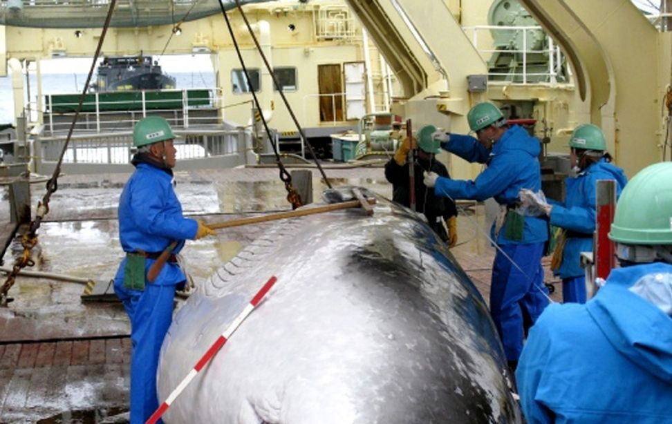 Japan calls off its controversial Antarctic whale hunt