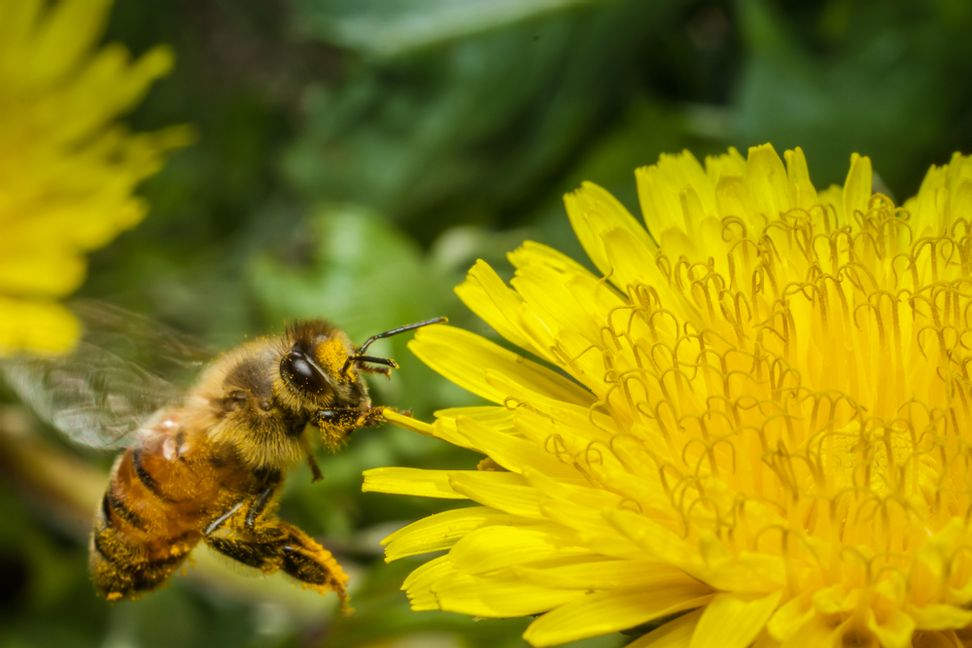Scientists may have pinpointed what's killing the bees: Yep, it's the pesticides