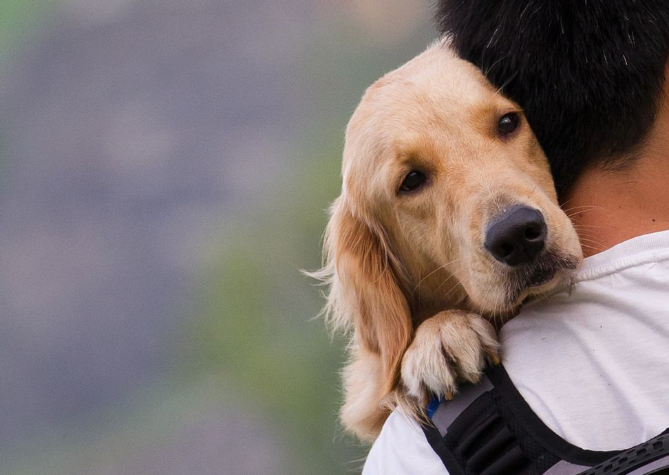 Science proves that you love your dog like a baby
