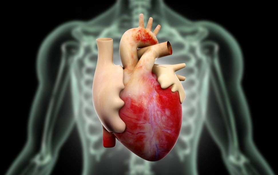 """For the first time ever, Australian surgeons transplant """"dead"""" hearts into patients"""