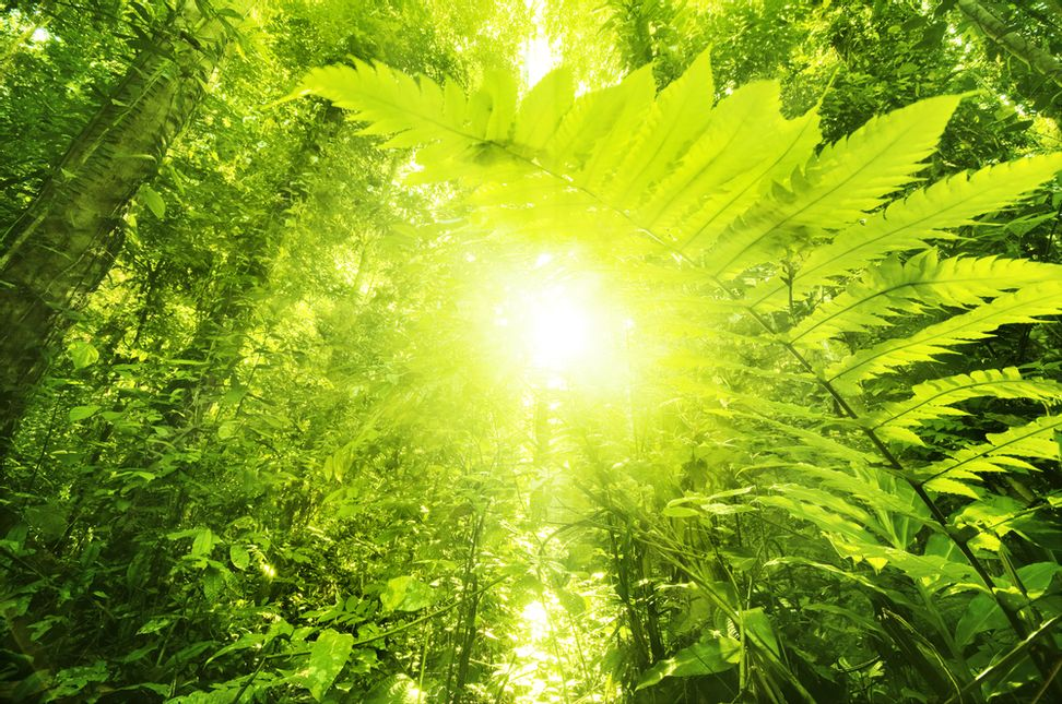 """We think we can do better than plants"": New ""bionic leaf"" makes fuel from sunlight 