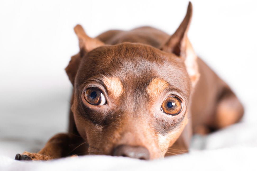 Our dogs can read our minds: The new neuroscience of animal brains and understanding