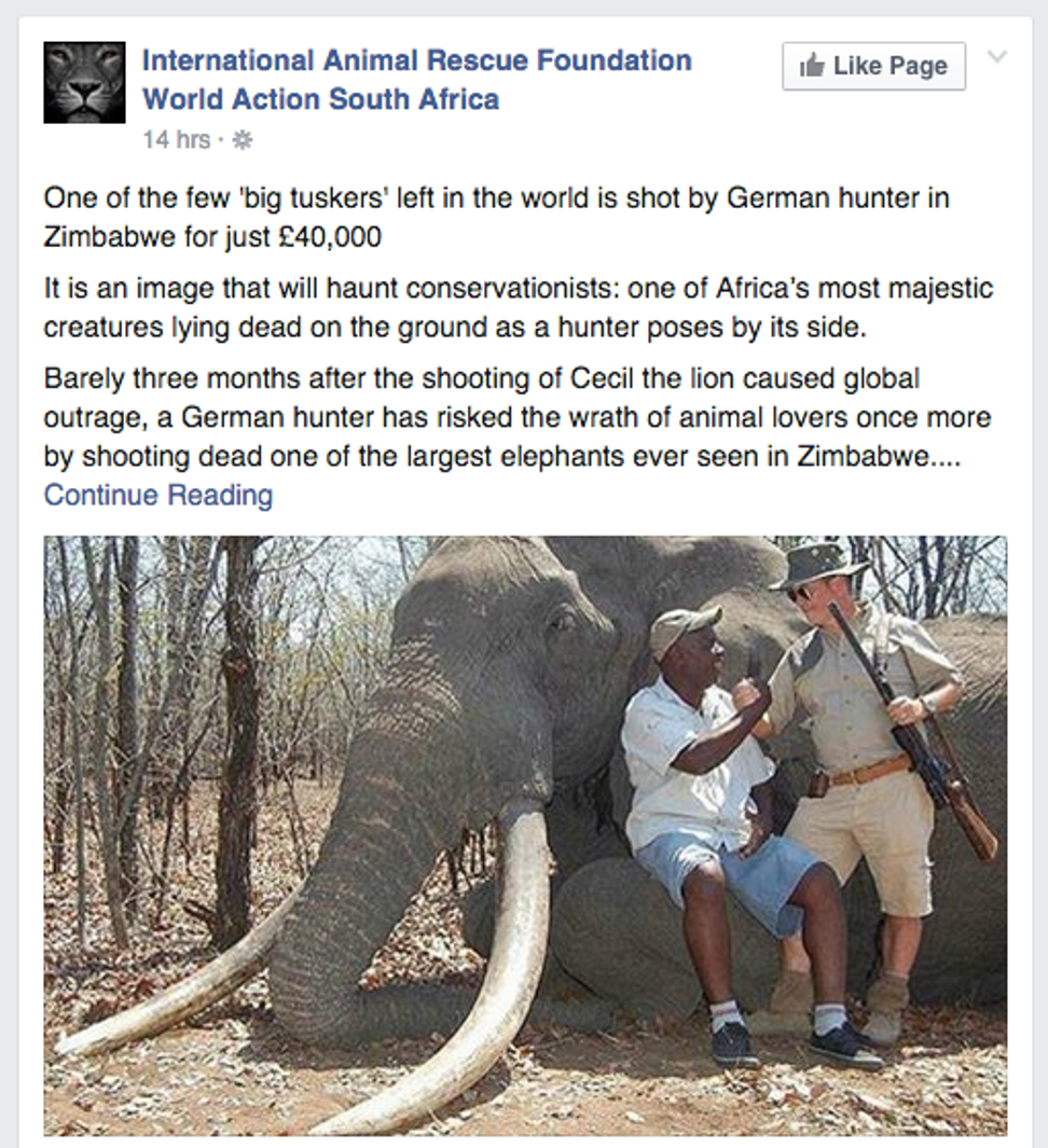 White hunter kills majestic African elephant on safari: Social media erupts as it's Cecil the Lion all over again