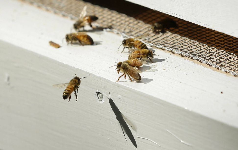 Seriously, we're all going to die: Insect populations are at apocalyptic levels