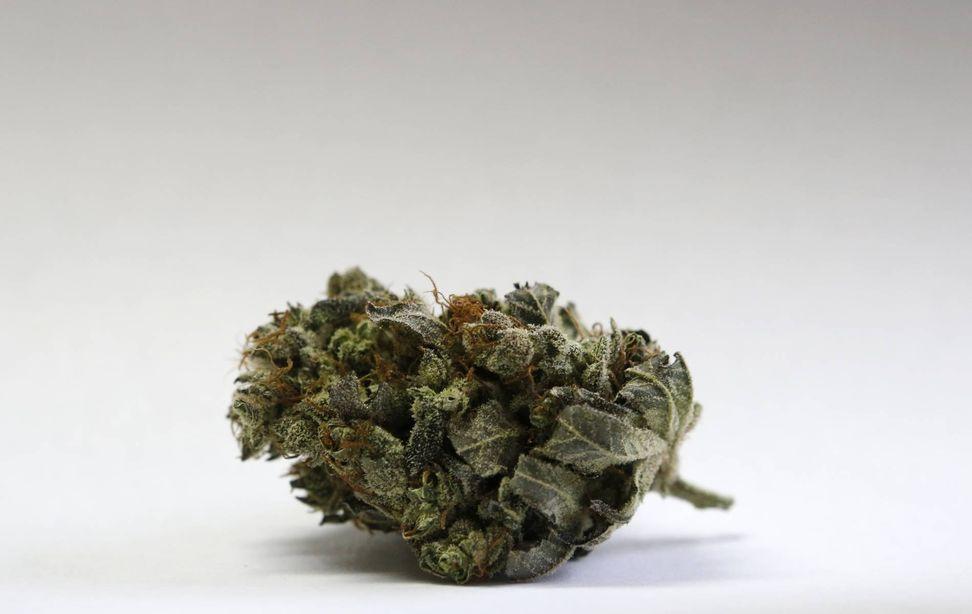 Microdosing marijuana: Doctors say it's the best way to consume pot