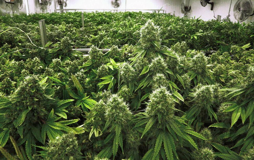 Seven surprising signs of marijuana's normalization in America | Salon.com