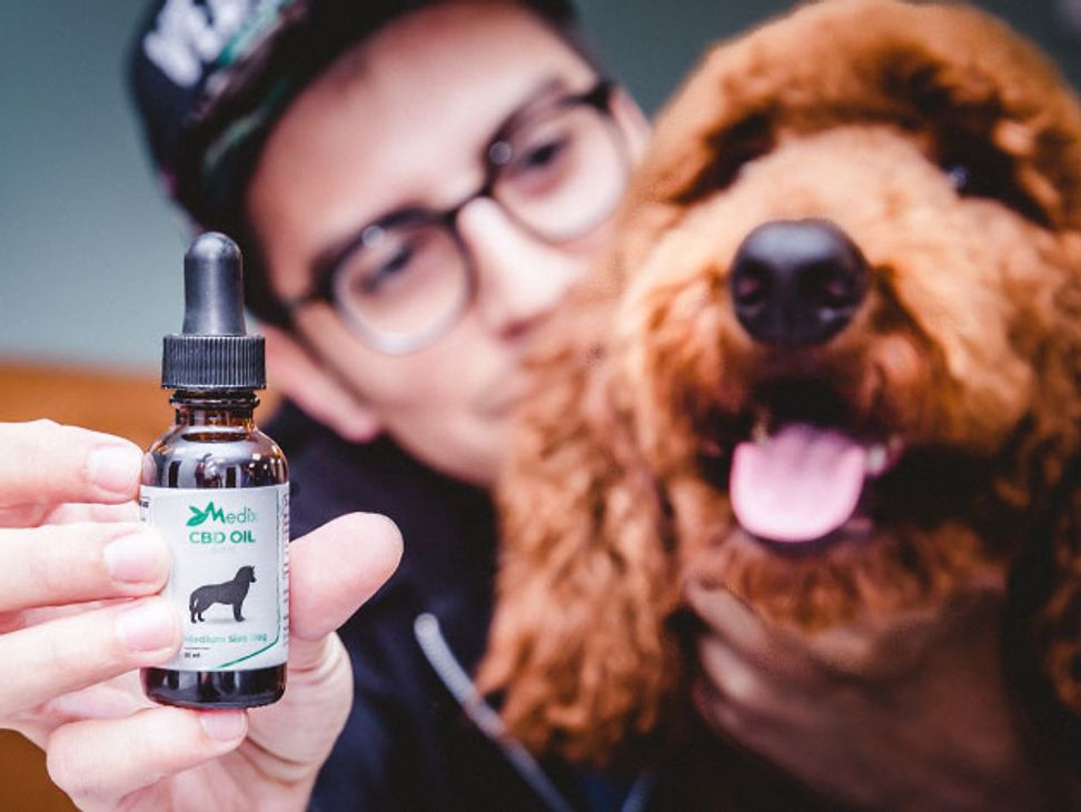 Soothe your dog's anxiety with CBD oil